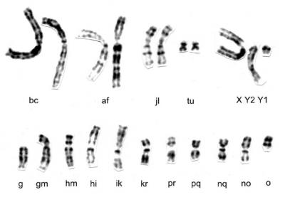 Fig. 1 in Pavlova et al. 2008
