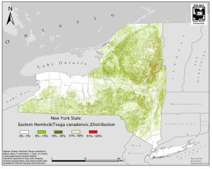 The distribution of eastern hemlocks in New York.