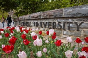 tulips blooming at Cornell.