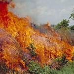 fire raging through forest