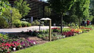 Newly planted plots outside the Nevin Welcome Center