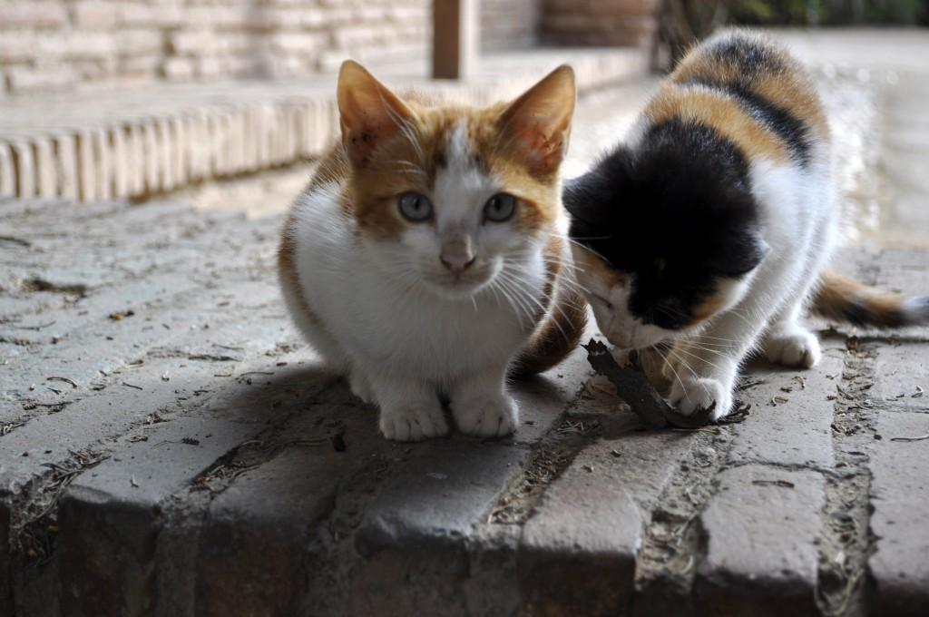 cute Alhambra kittens