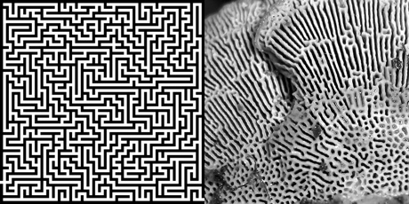 The maze and the maze-maker
