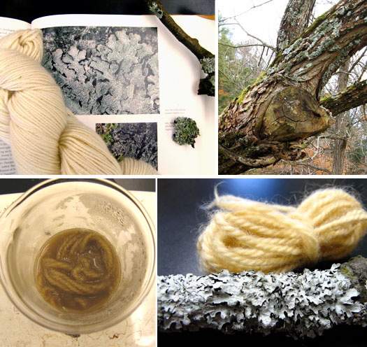 Dyeing with Lichens & Mushrooms :Cornell Mushroom Blog