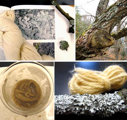 Lichen dyeing with Parmelia sulcata