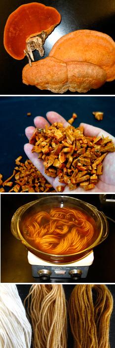 Dyeing with Pycnoporus cinnabarinus
