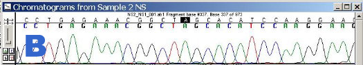 Output from the DNA sequencer: Peaks of different colours=different bases