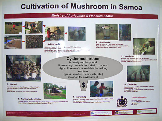 Daisuke Goto's poster to teach locals about mushroom cultivation in Samoa