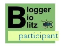 Blogger bioblitz