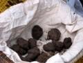 truffles2-525thumb
