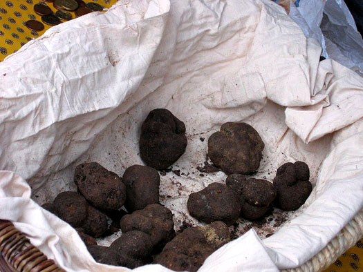 Black Truffles, freshly harvested and ready for market.