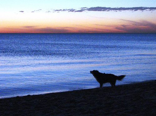 Flickr: Sunset Mentone beach dog walk, by Jessica Rabbit