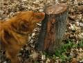 stumpy ooze
