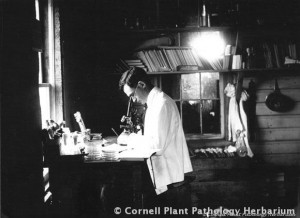Errett Wallace figuring out fungal life cycles in 1907