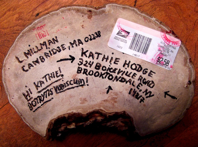 postal Ganoderma applanatum: I don't live there anymore.
