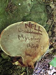 Cortland-Cornell Conk Contest