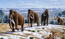 Woolly mammoths, from art by Mauricio_Antón