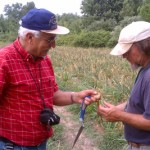 Christy Hoepting Cornell nematologist George S. Abawi, left, with extension associate Robert Hadad checking garlic in the field.