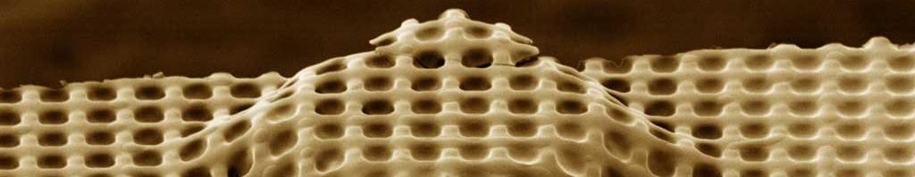 3D tissue scaffold