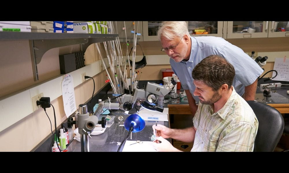 Lab technician constructing a microdrive and being checked by David Smith, PhD. Photo Credit: Dave Burbank / Cornell