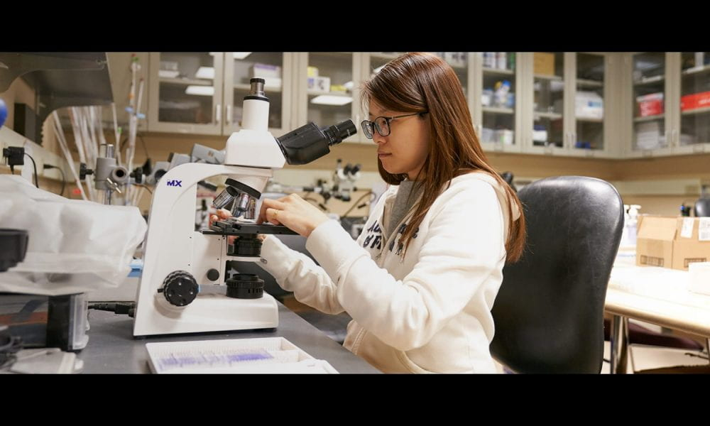 Postdoc Wen-Yi in the lab looking at slides on a microscope.