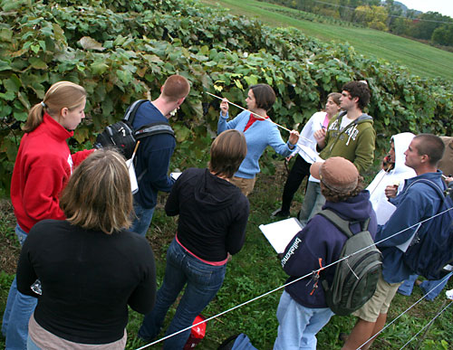 Justine Vanden Heuvel (center) teaches students how to assess grape canopy coverage at Cornell Orchards.