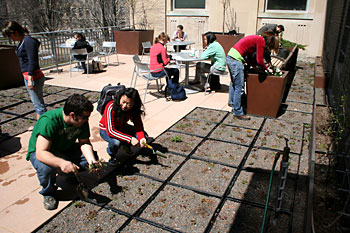 Students from Creating the Urban Eden course refurbish plantings on the Mann Library Terrace