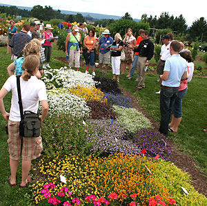 Viewing beds at 2009 Cornell Floriculture Field Day