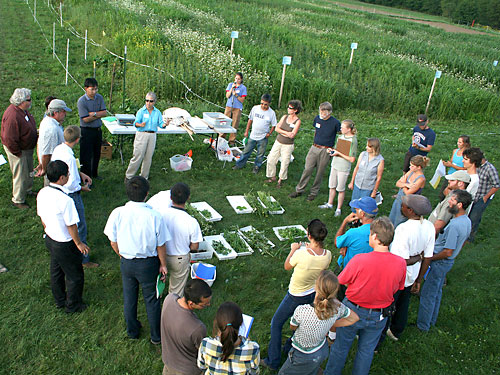 Analyzing cover crops at Freeville organic field day.