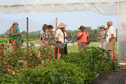 Participants view hoophouse crops at Freeville organic twilight tour.