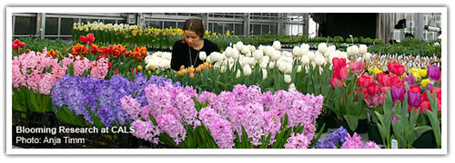Greenhouse grower Jenny Rothenberg and flower bulbs at Kenneth Post Lab Greenhouses grace the 'cover' of the February 2010 eCALSconnect newsletter.