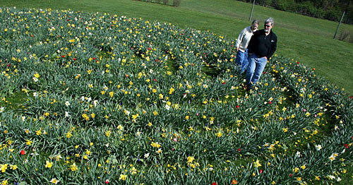 Dean Susan Henry and her husband Peter walk the flower bulb labyrinth.