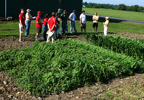 In a specially planted field, competitors prepare to determine which herbicides were applied based on symptoms displayed by crops and weeds.