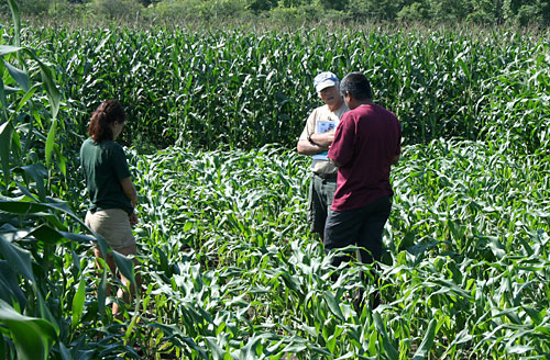 Brian Caldwell, Department of Crop and Soil Sciences (center), plays a farmer who corn was damaged by geese.