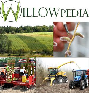 Willowpedia composite image