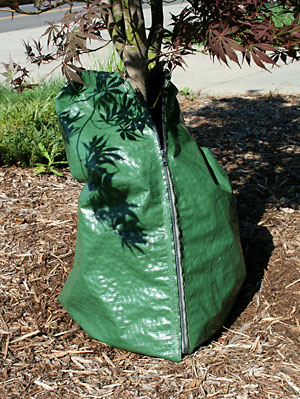 A 2-inch layer of mulch reduces moisture lost from soil, while drip irrigation bags deliver water to trees slowly so that it has time to penetrate deep into the soil. Click image for high resolution version.
