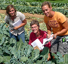 Team members evaluate broccoli varieties in Albion, N.Y. From left: Mary Van Ryn, broccoli breeder for Bejo Seed Co.; Thomas Bjorkman, assistant professor of horticulture; and Christy Hoepting, extension educator with the Cornell Vegetable Program.