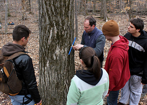 Horticulture volunteer Marc Göbel demonstrates how to remove a tree core to determine its age.