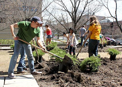 Urban Eden students planting on east side of Malott Hall