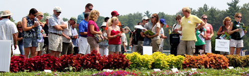 Floriculture Field Day participants view coleus bed.
