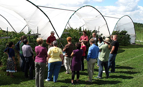 Raspberry high tunnels at NYSAES in Geneva