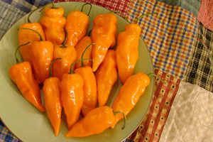 Habanada peppers
