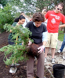 Nina Bassuk demonstrates how to install container-grown plants.