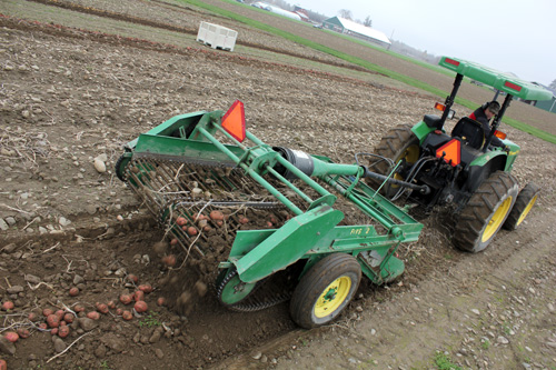 Farm manager Steve McKay digs potatoes ahead of the gleaners.