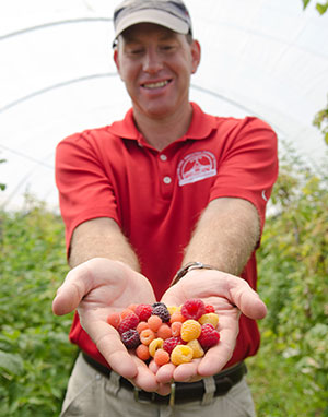 'Double Gold' and 'Crimson Night' are the fourth and fifth new berry varieties introduced by Associate Professor of Horticulture Courtney Weber in the past year. Other recent releases include Purple Wonder™, the darkest strawberry variety available, and the 'Crimson Giant' raspberry, suitable for high tunnel cropping systems with harvest into November. Photo: Robin Wishna