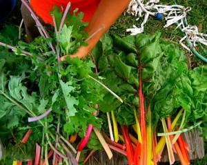 What varieties will perform best in your garden?