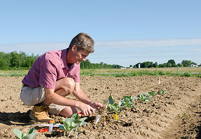 Thomas Björkman works with broccoli varieties adapted to the East Coast's hot and humid summers. Robyn Wishna photo.