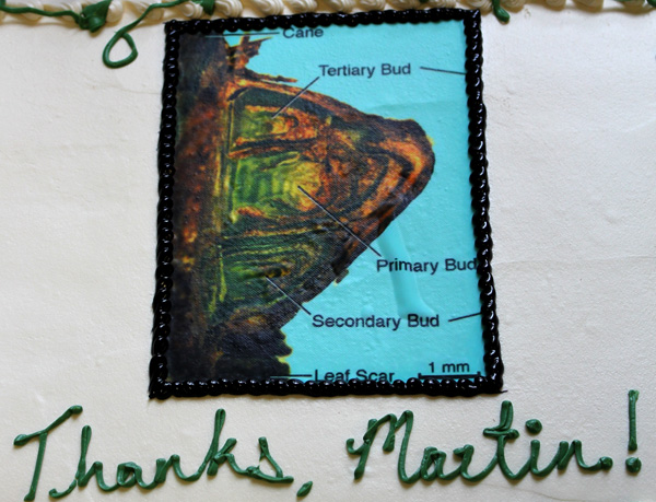 Goffinet's ceremonial cake featured a frosting version of one of his classic grapevine anatomy images.
