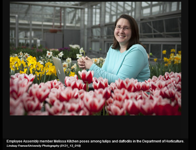 Melissa Kitchen tends tulips at KPL greenhouses in this Picture Cornell screencapture.