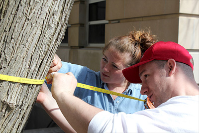 'Urban Eden' students Molly Fancler and John Crespo measure a tree on the Ag Quad to calculate the benefits that tree returns.